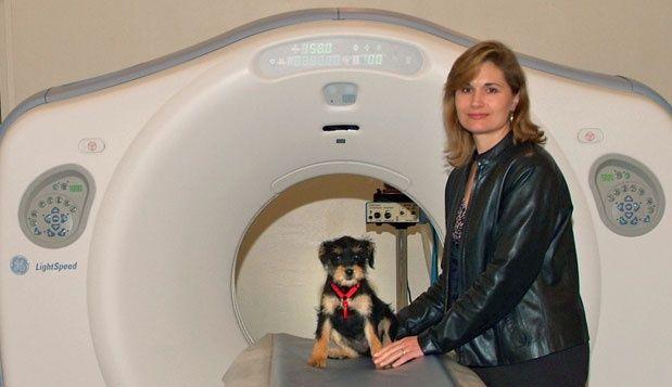 Radiologist College Harlingen Texas 78550