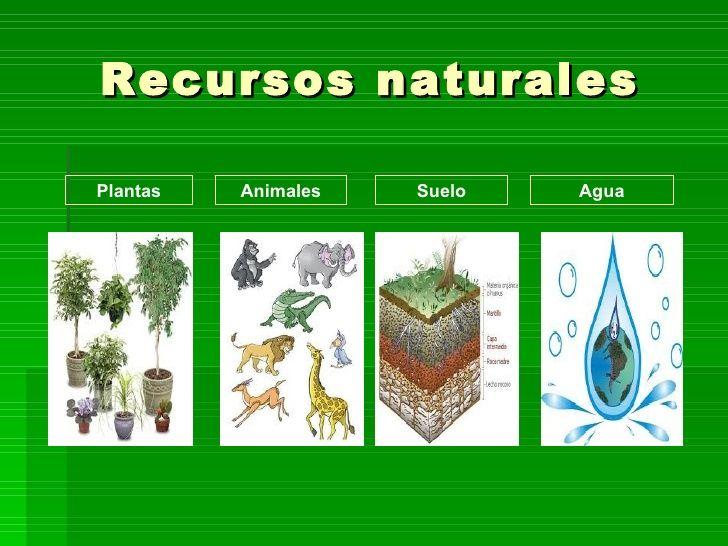Resultado De Imagen Para Recursos Naturales Recursos Naturales Tipos De Recursos Naturales Recursos Naturales Renovables