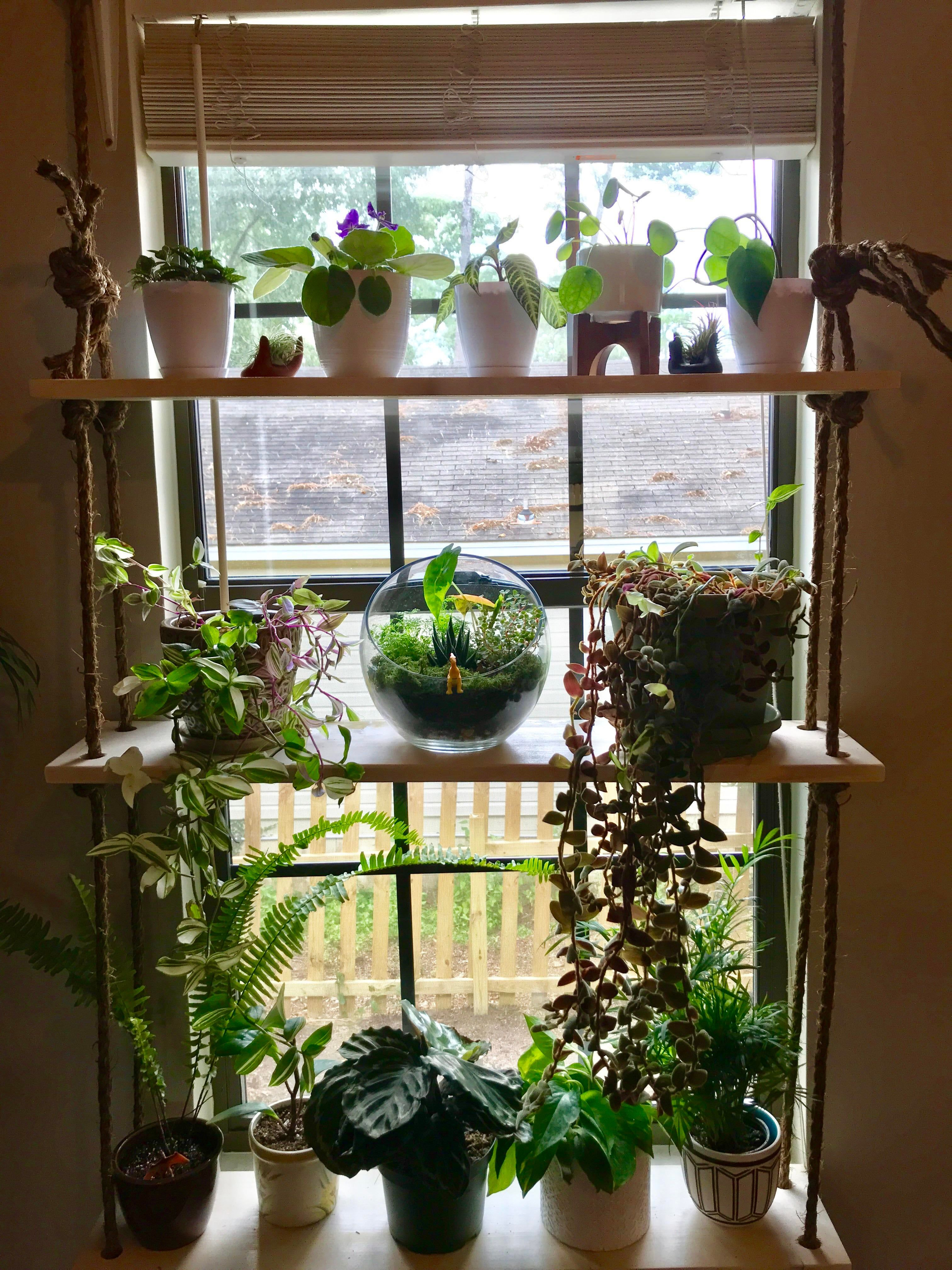 Attempt Babies Diy Lights Place Plant Shelf Struggling