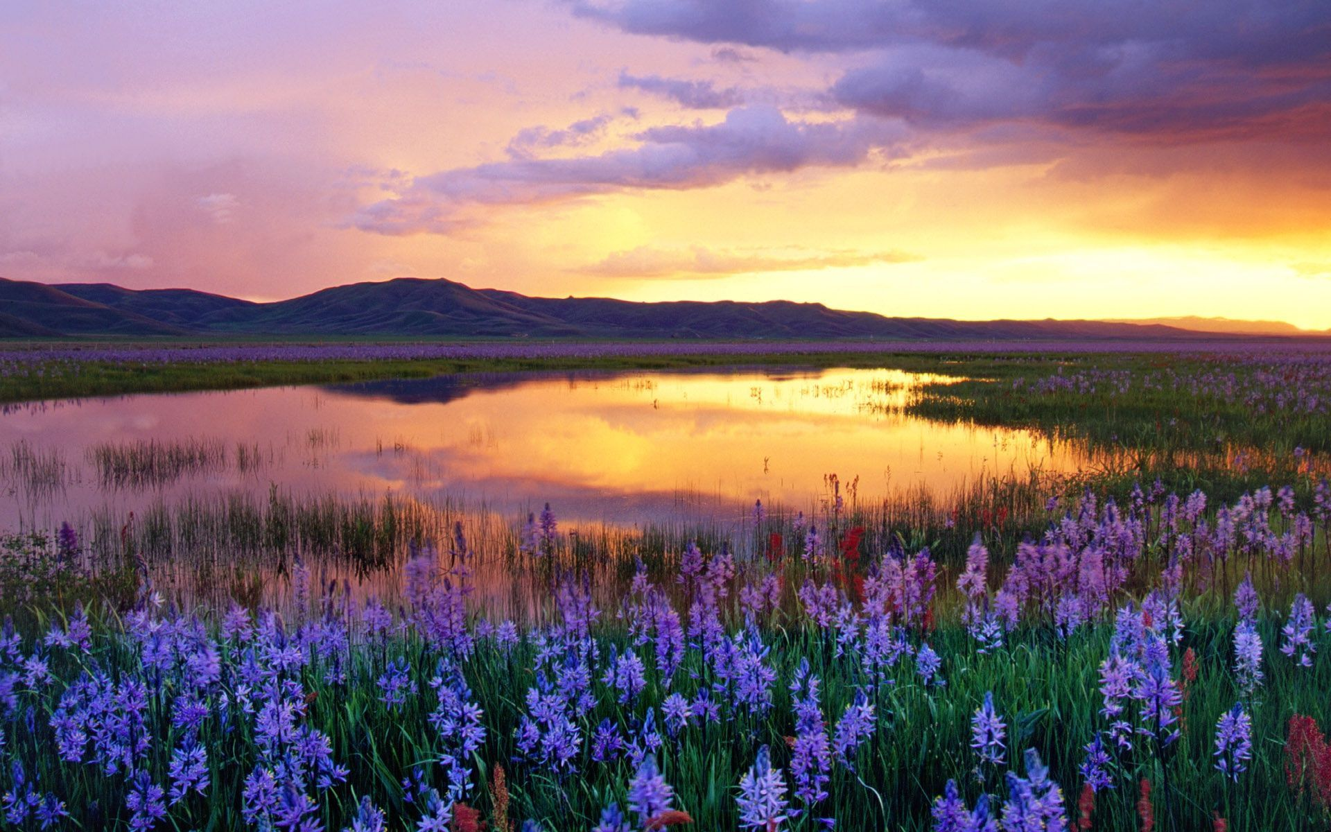 flower field sunset. High Resolution Images Of Nature | Flowers Field Sunset Wallpaper And Photo Download Flower A