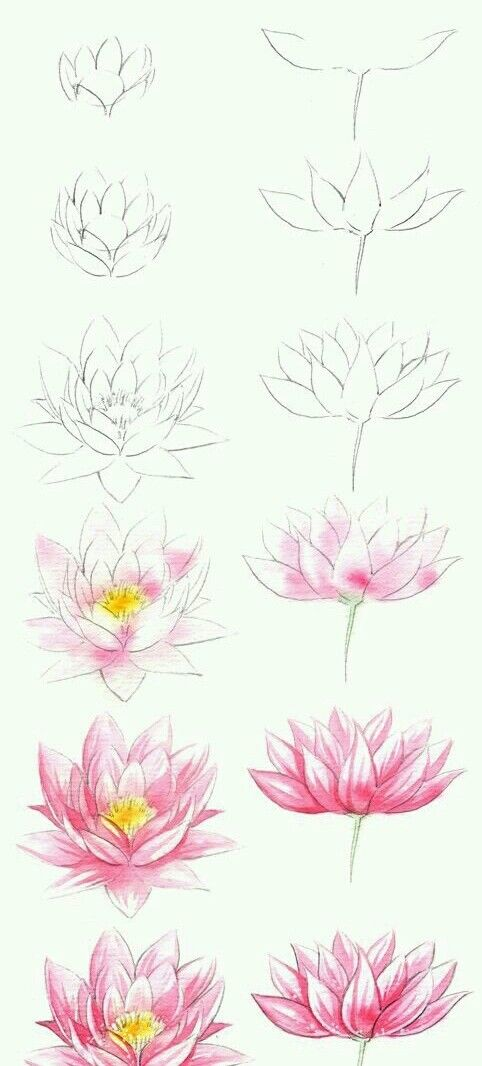 Lotus Flower Art Pencil Drawings Art Drawings Drawing Techniques