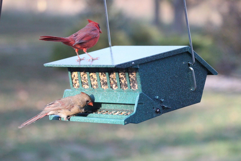 Audubon Bird's Delight Squirrel Resistant