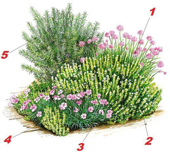 использование морской травы на огороде