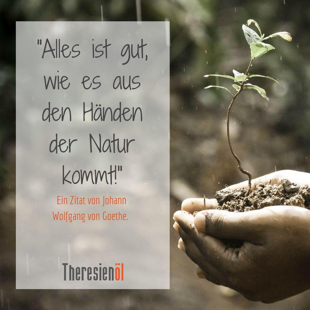 Alles Ist Gut Wie Es Aus Den Handen Der Natur Kommt Ein Zitat Zum Sonntag Von Johann Wolfgang Von Goethe Gedanken Zitate Zitate Inspirierende Zitate