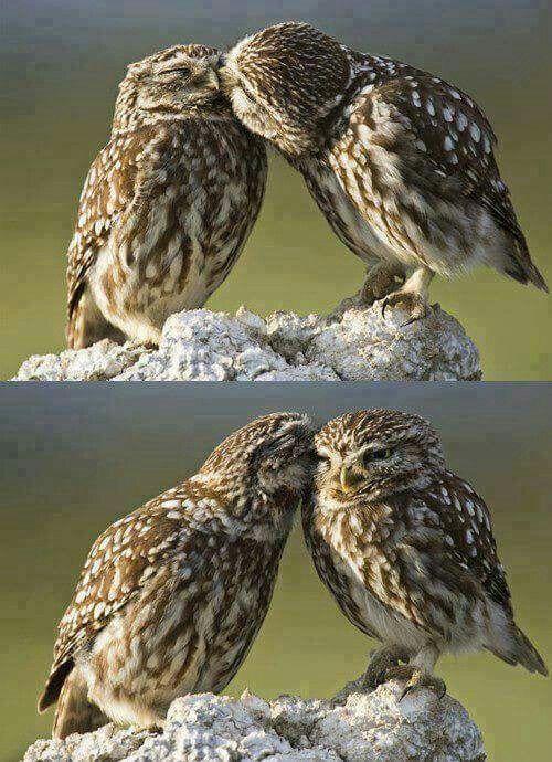 Maravillosa Pareja De Buhos Fotos De Buhos Aves De Compania