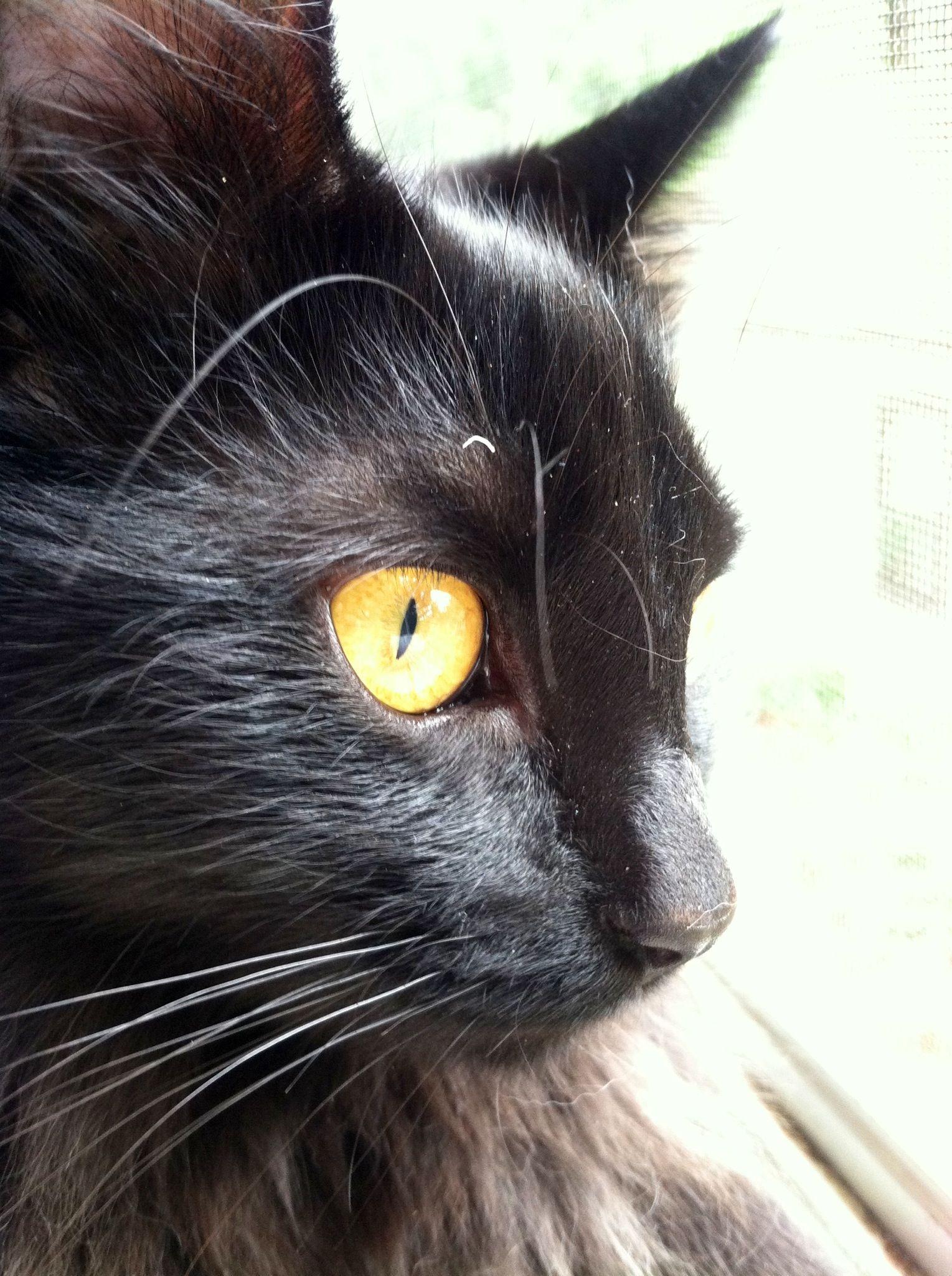 Beautiful kitty aminals pinterest beautiful and kitty