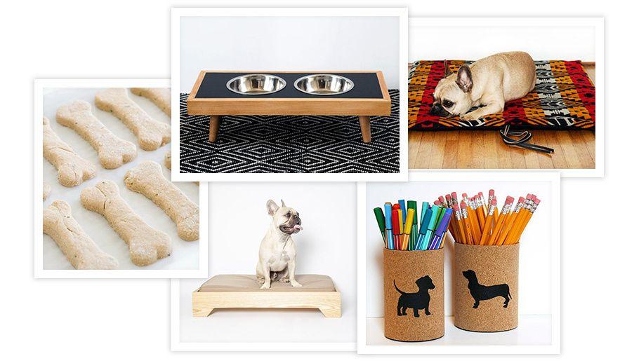 Le Pinterest de Dog Milk shopping accessoires griffés pour chien