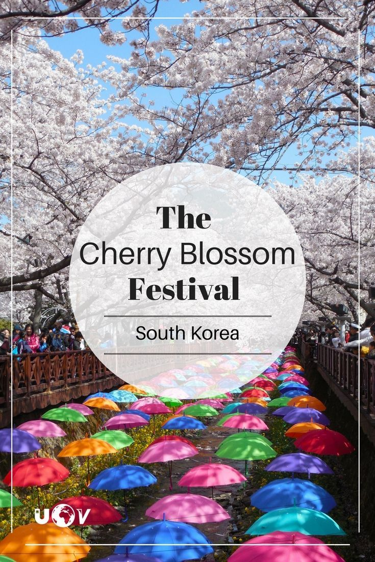 Ultimate Guide To The Cherry Blossom Festival In Jinhae South Korea Cherry Blossom Festival South Korea Travel Round The World Trip