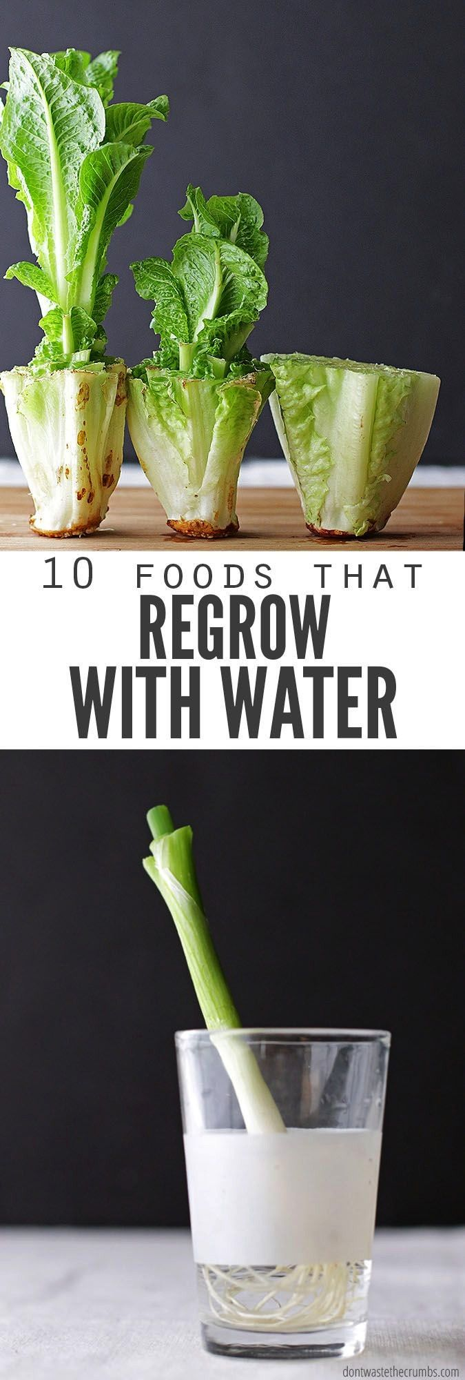money and regrow food scraps in water Perfect if you dont have room for a vegetable garden  are trying to save a few bucks But which veggies or fruit will regrow from scr...