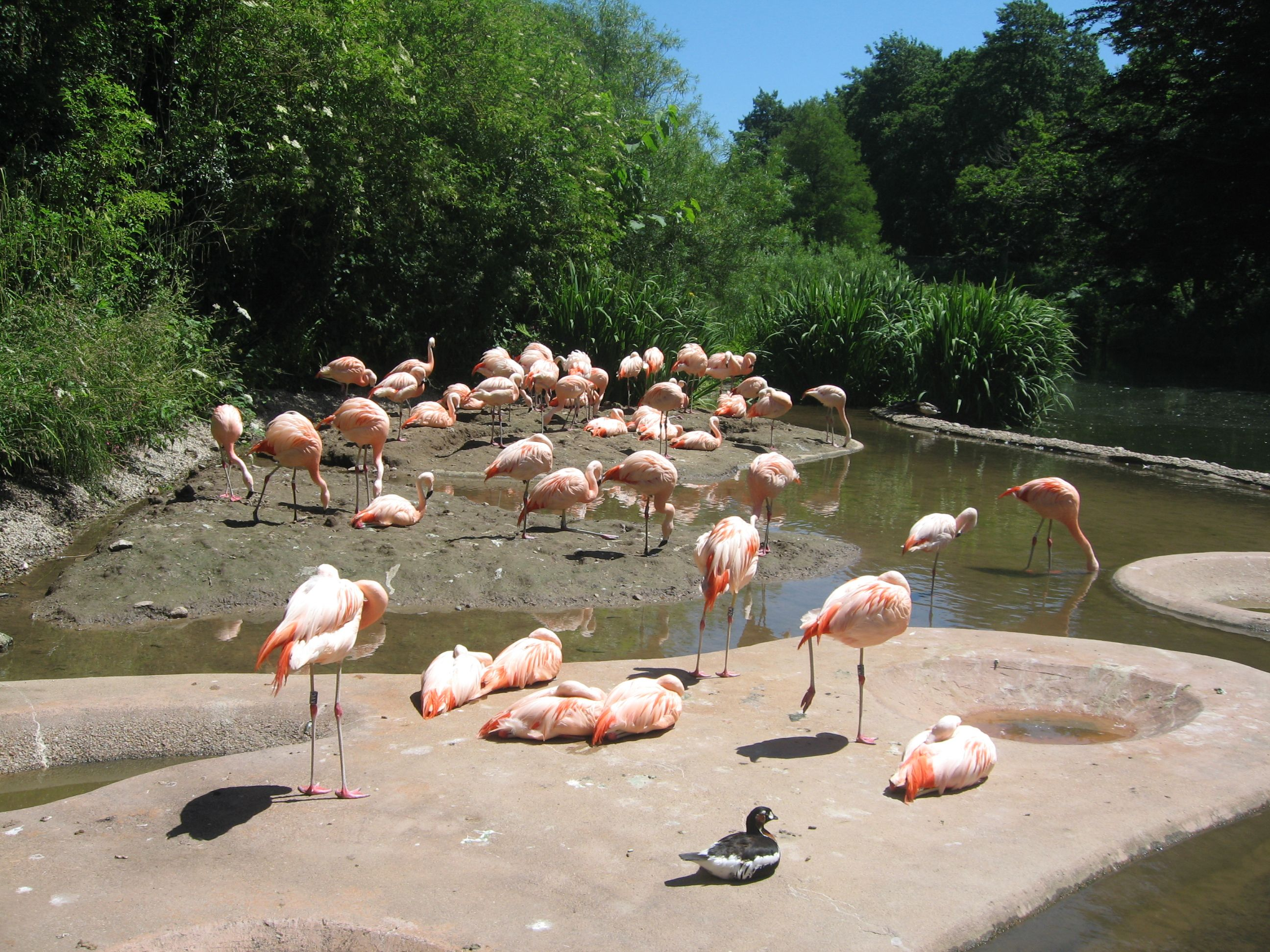 Jersey Zoo founded by Gerald Durrell Zoo, Jersey channel