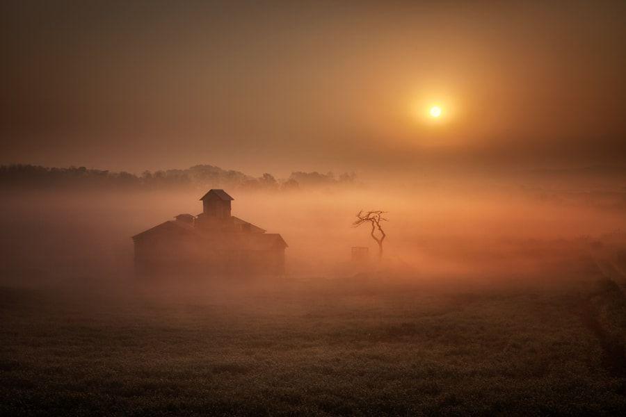 Color of fog by c1113            안개 짙던 안성목장.....            c1113: Photos                                 #nature #photography
