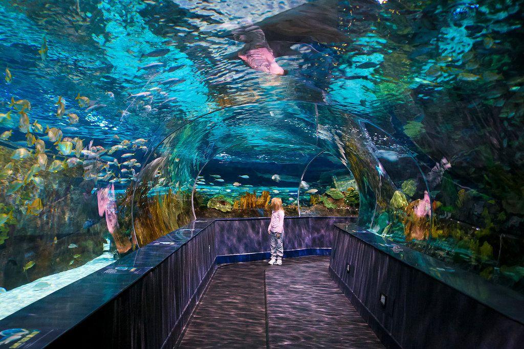 Die besten 25+ Gatlinburg aquarium Ideen auf Pinterest ...