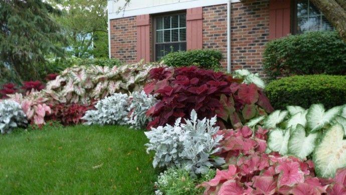 Schattenpflanzen in prachtvollen farben f r einen - Stauden fur steingarten ...