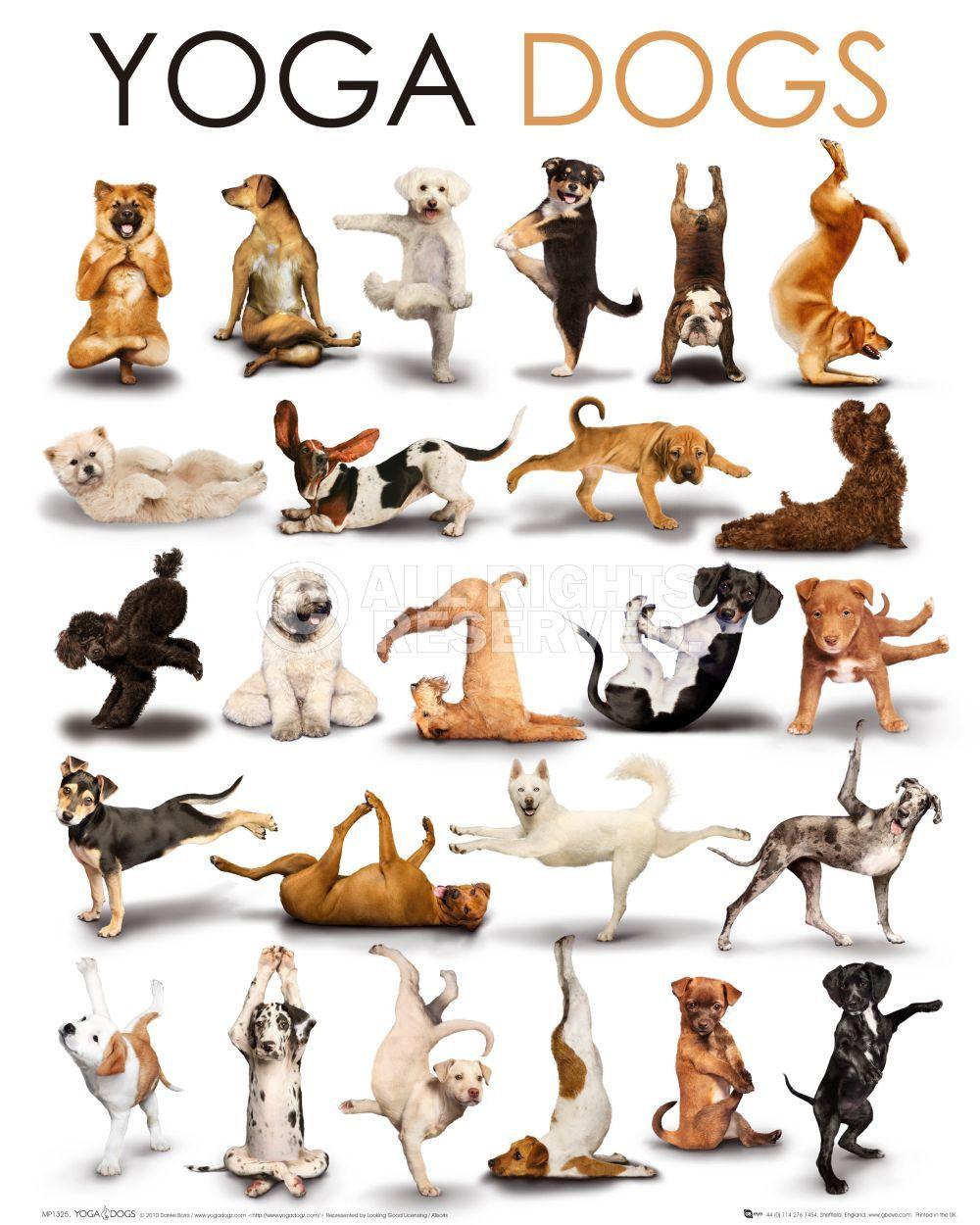 Kuvahaun tulos haulle yoga dogs