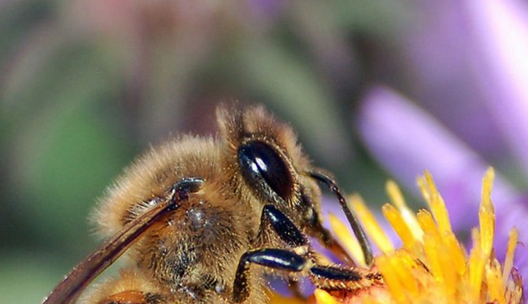 Eugene, Oregon First in the Country to Ban Honey Bee-Killing Pesticides | One Green Planet