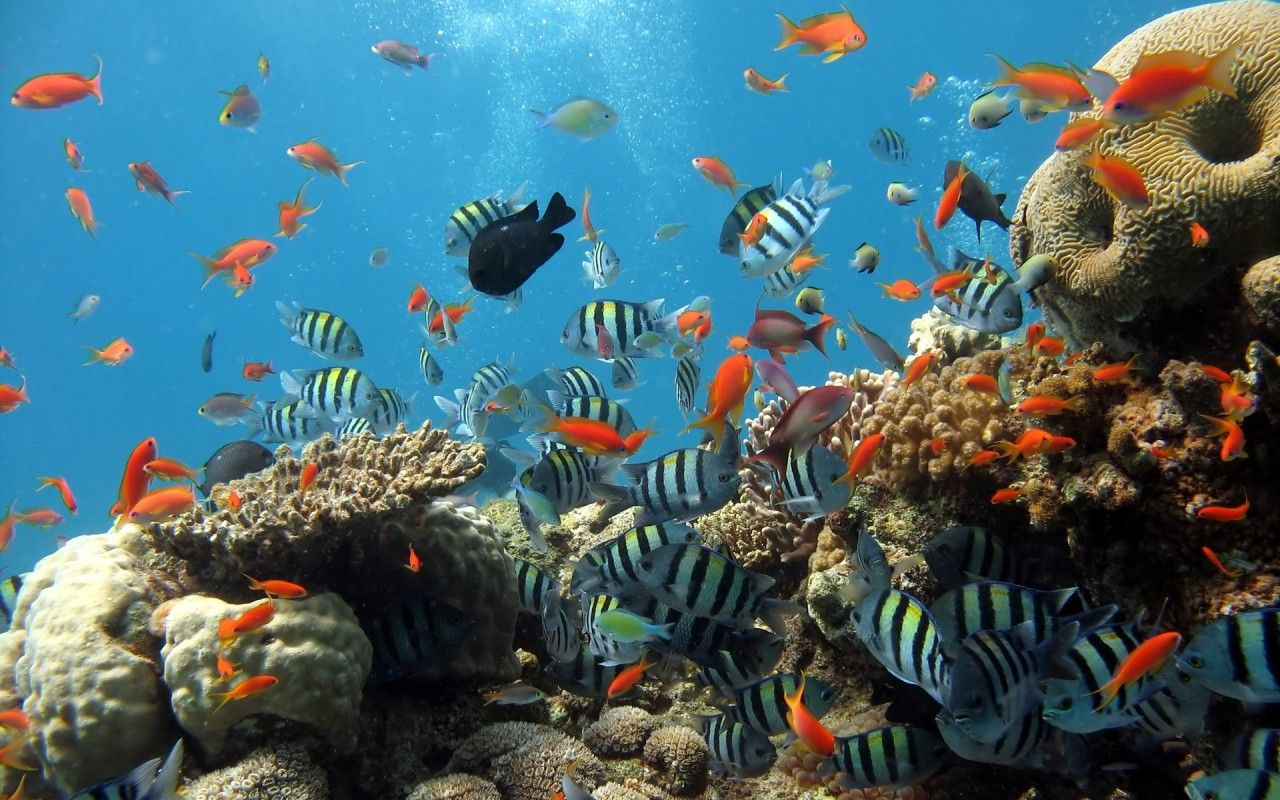 Every living thing in the seas are slowly dying | Dead sea and ...