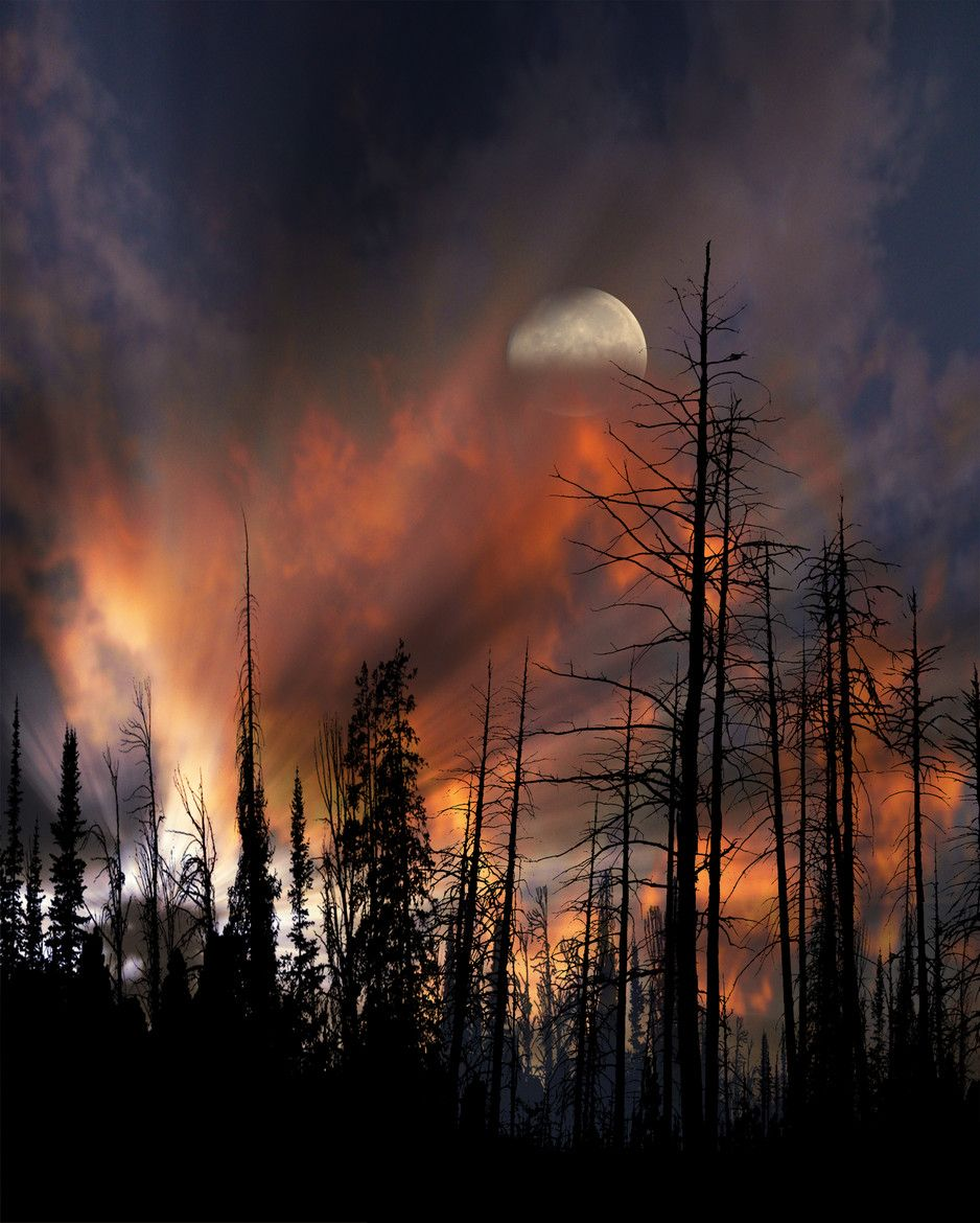 Photograph 3448 by peter holme iii