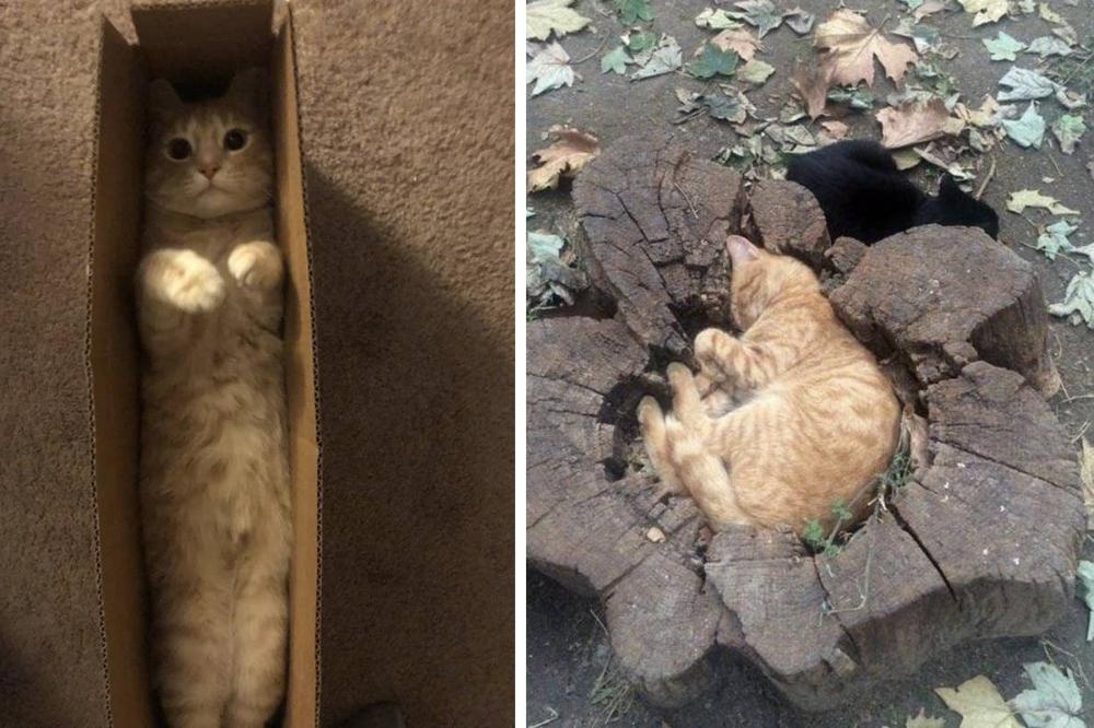 10+ фото смешных котов, которые предпочитают странные места для отдыха. Ридус
