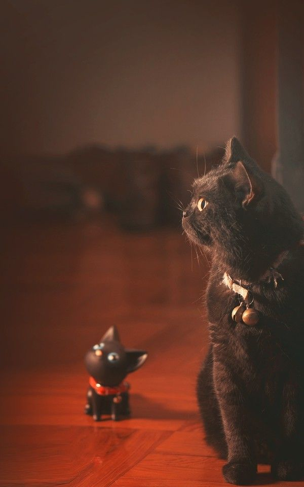 Looking At Same Way By Hilighters Ryan Crazy Cats Black Cat Cat Love