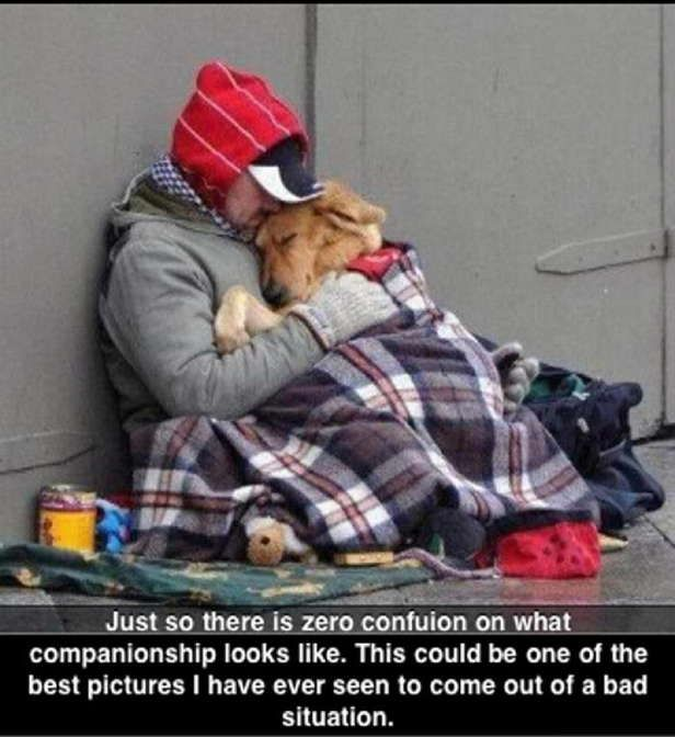 companion ship of a dog quotes - Bing Images Such a wonderful image!