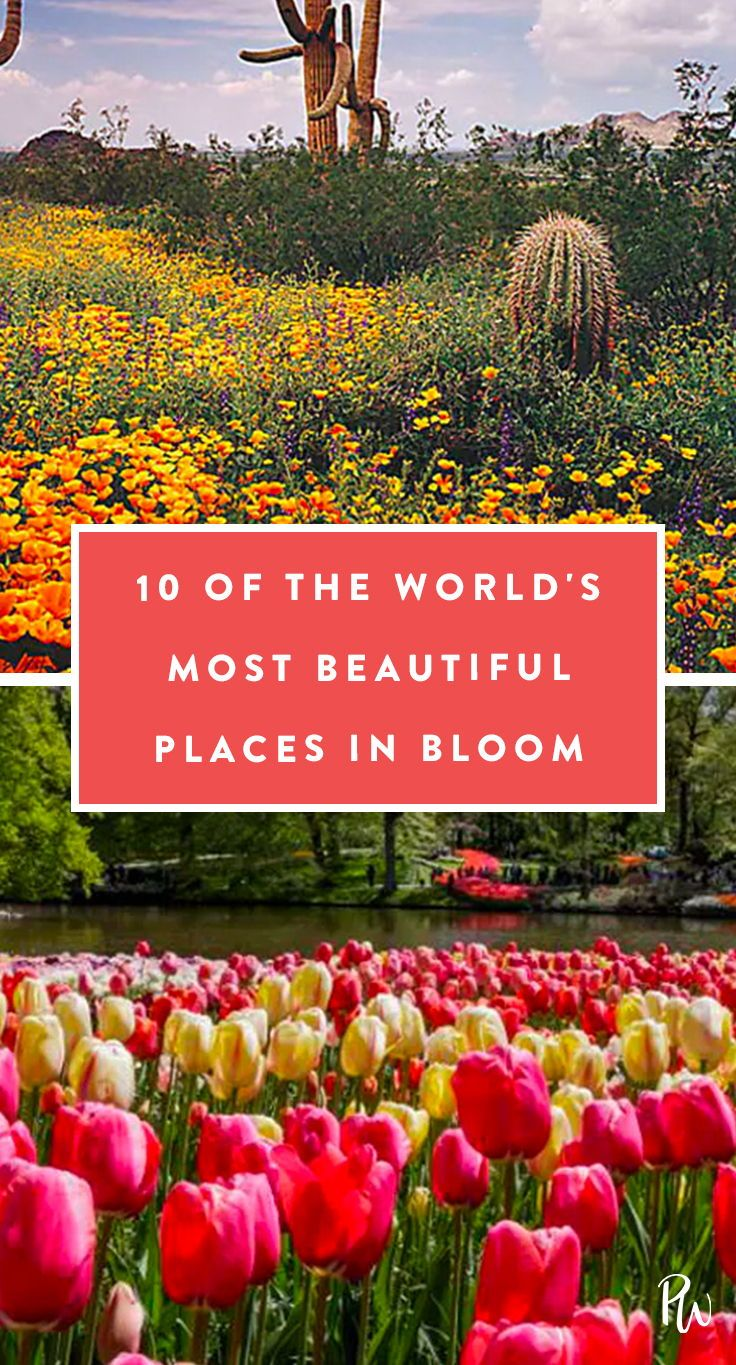 10 of the worlds most beautiful places in bloom bucket list the most beautiful flowers in the world flowers beautiful izmirmasajfo