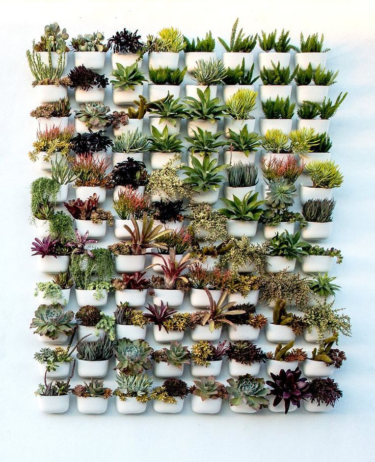 Creative Unique Design With Living Plant Wall Low Light Plants