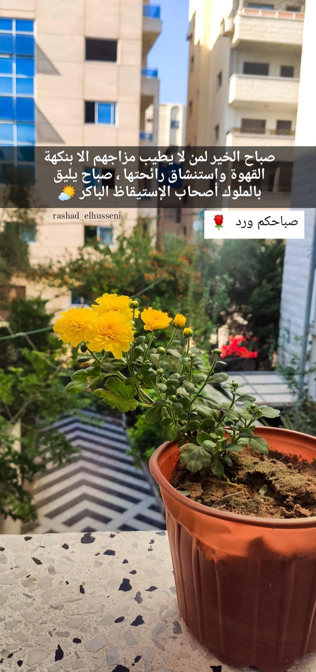 ورد أصفر طبيعة شجر اصفر غزة طبيعة جميل فلسطين القدس كلام تصوير صور ابيض صباح خير صل Plants