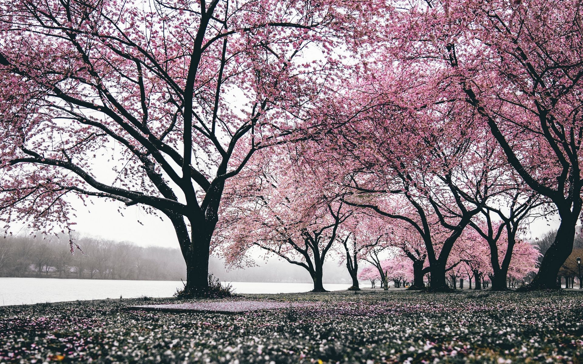 Best Nature Good Morning Images Photo Pics Hd Download And Share Japan Sakura Wallpaper Sakura Haruno