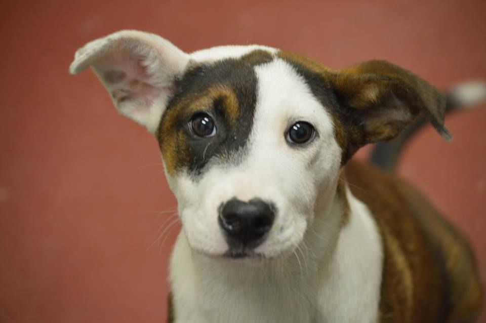 Share Georgia This Babys Final Day Friday May 23 14 Posted Only 7 Hours Ago And Must Be Rescued Or Adopted By To Dog Adoption Cute Animals Pets
