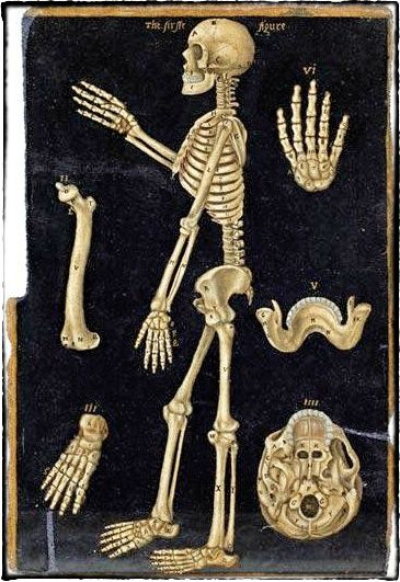 #JohnBanister #AnatomicalTables 1580..