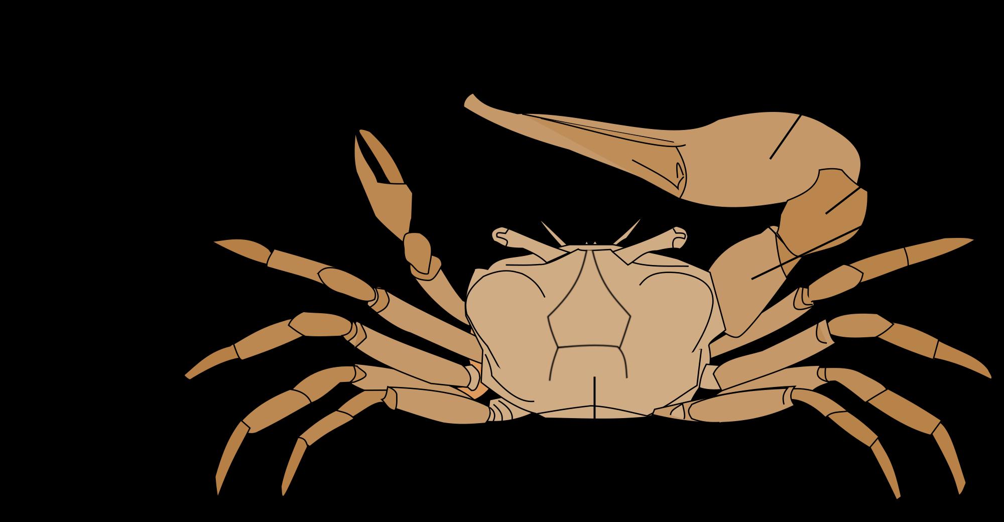 Magnífico King Crab Anatomy Ideas - Anatomía de Las Imágenesdel ...