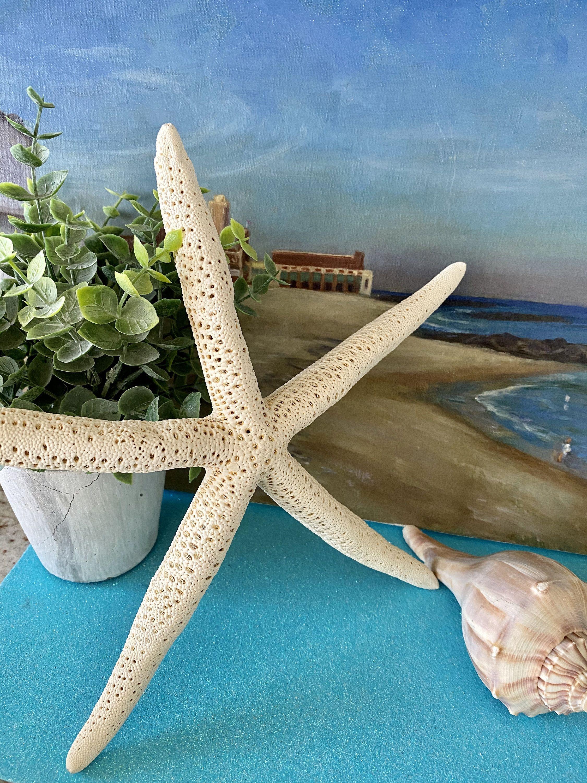 Pencil Starfish 10 Set Of 2 Beach Home Decor Craft Etsy Decor Crafts Natural Home Decor Nautical Decor