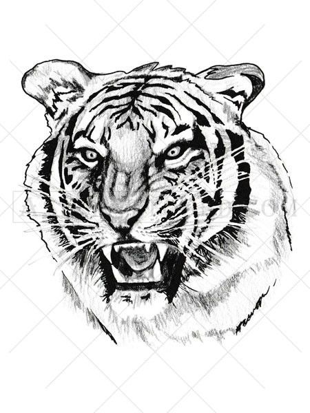 f088855ad This highly detailed black and white tiger tattoo represents strength,  power and danger. This cool tattoo looks awesome as a shoulder or chest  tattoo, ...