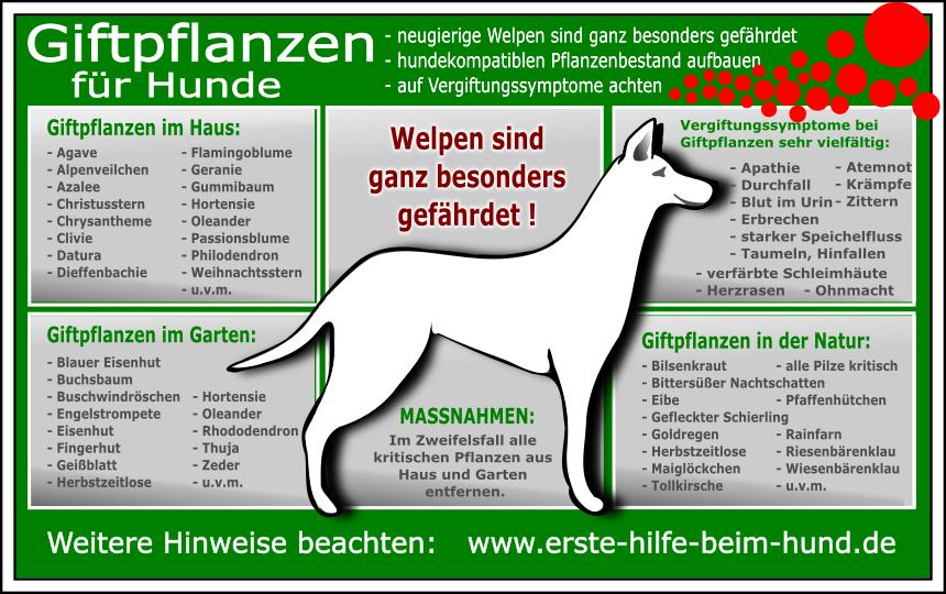 Giftige Pflanzen Giftige Pflanzen Hunde Hundehaltung