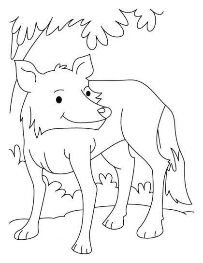 Arctic Wolf Drawing Clipart Best Wolf Colors Coloring Pages Free Kids Coloring Pages
