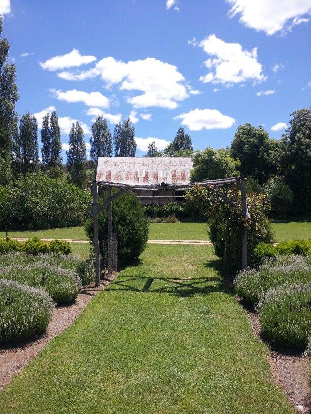 Lavendula Swiss Italian lavender farm Shepherds Flat