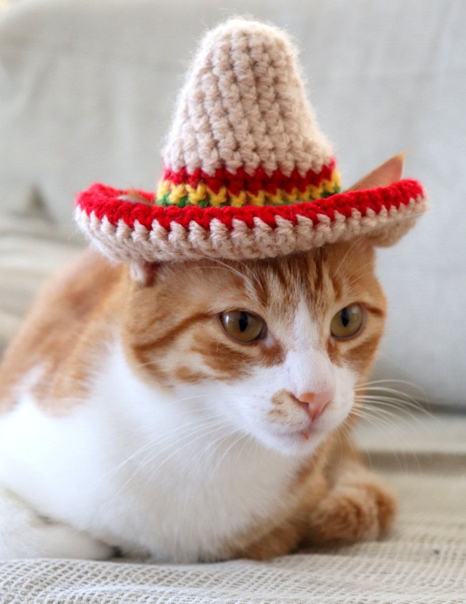 Cat Sombrero Sombrero For Cats Sombrero Hat With Ear Holes For Cats And Xs Dogs Cinco De Mayo Cat Hat Fiesta Hat For Cats Taco Cat Hat In 2020 Taco Cat