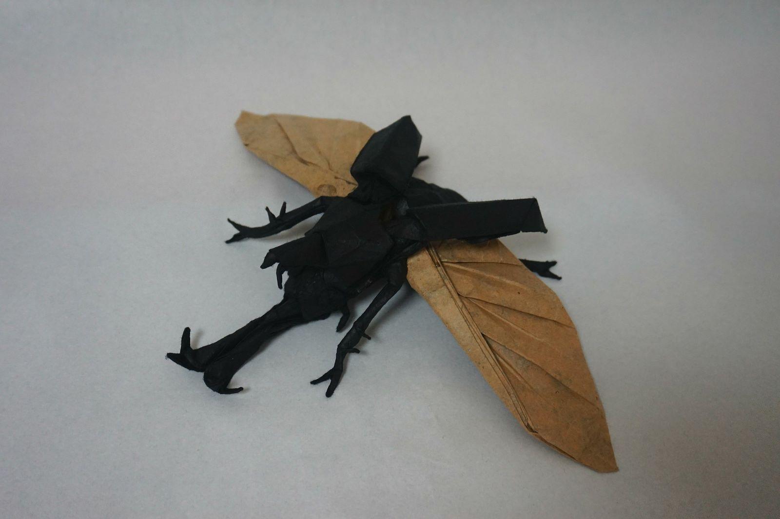 Shuki Kato - Flying Kabutomushi | by Kim, Kyoung Su