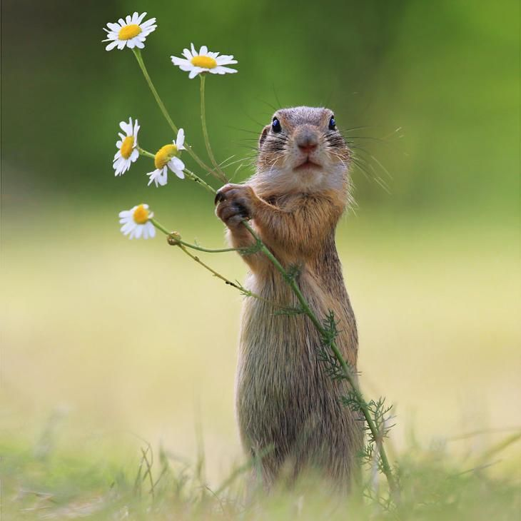Позитив из дикой природы в фотографиях | Сообщения для дня ...