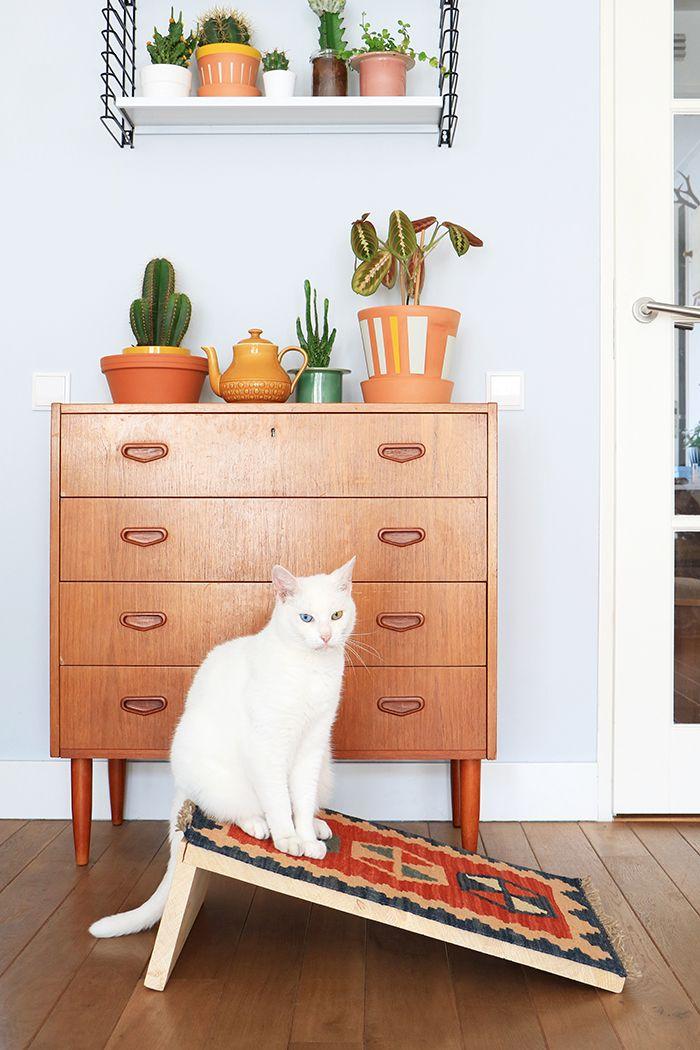 diy katten krabpaal het wandkastje van de hema een cactus en een gave kast diy home. Black Bedroom Furniture Sets. Home Design Ideas