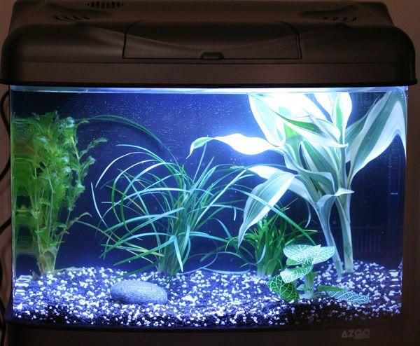 Blue Gravel Aquarium Tank Aquarium Kies Aquarien Aquarium