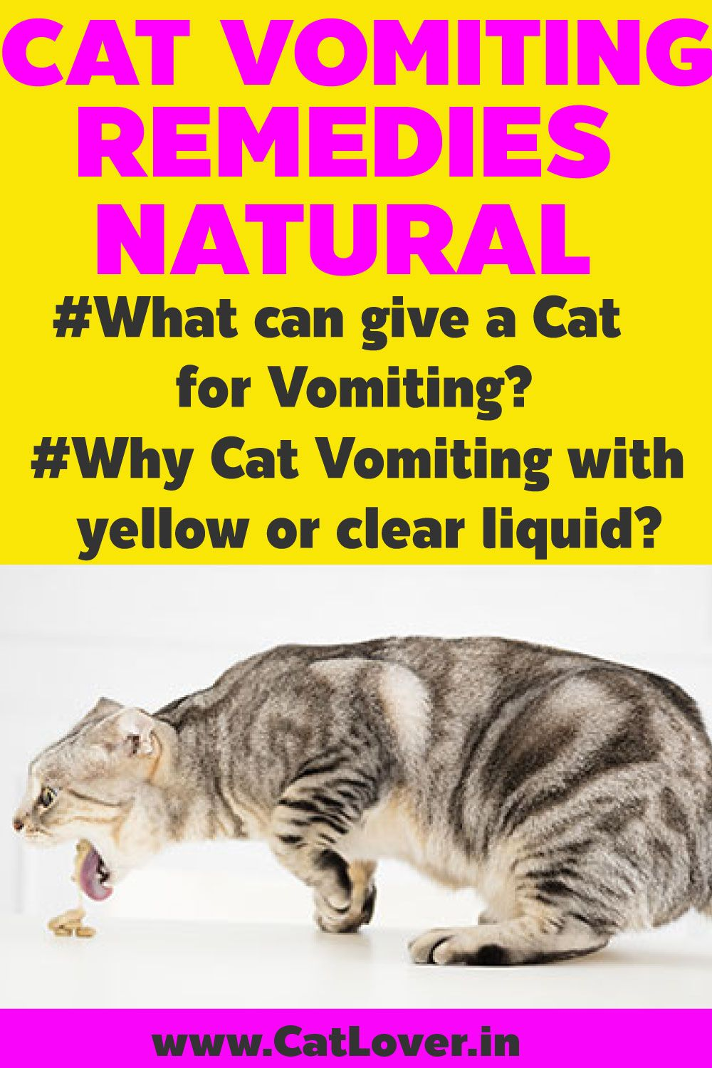Q&A Cat/Kitten Vomiting Vomiting remedies, Cat remedies