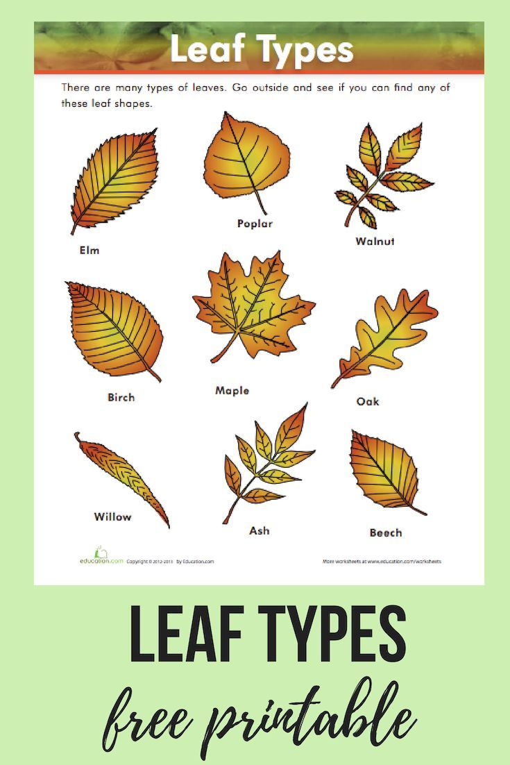 Leaf Types Worksheet Education Com Science Printables Leaf Identification Earth Science Projects