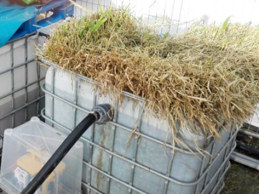 Kořenová čistička může odstranit zbytky léků z odpadní vody