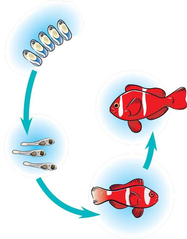 Fish life cycle life cycles pinterest cycling for Fish life cycle