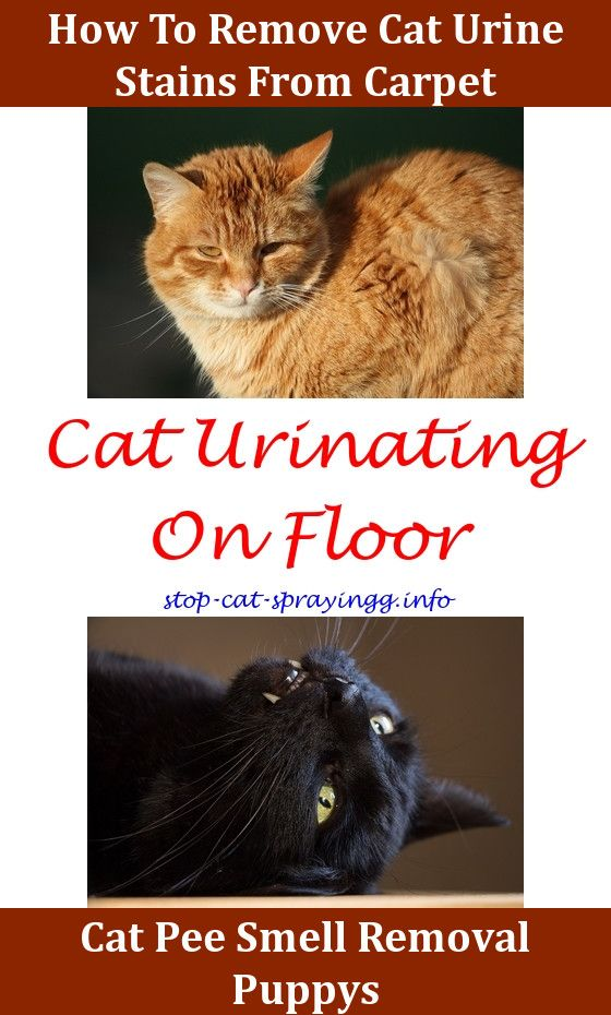 Cat Spraying White Vinegar Smell Removal Cleaning Tips Female Ing Outside Litter Box Old Urine In Carpet Out Of Ma