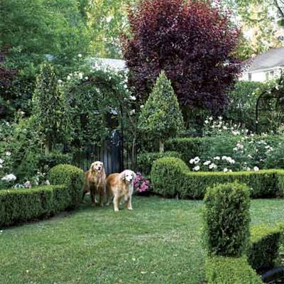 5 Design Ideas for Sheared Shrubs - 5 Design Ideas For Sheared Shrubs Decorative Bricks, Lawn And Flower