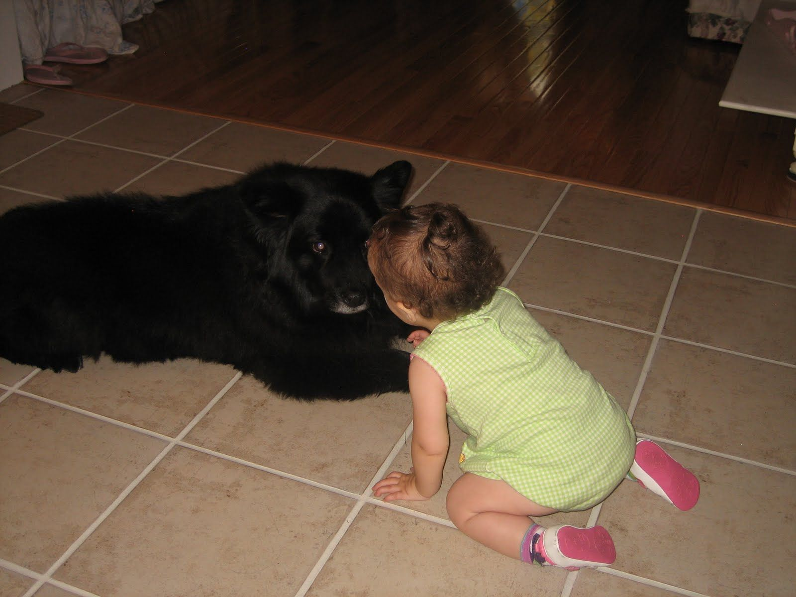 Threat Pupils Dilated Dog Appears To Be Making Hard Eye Contact This Baby Should Not Be Allowed To Remain In This Dog S Face Dog Face Dogs Canine