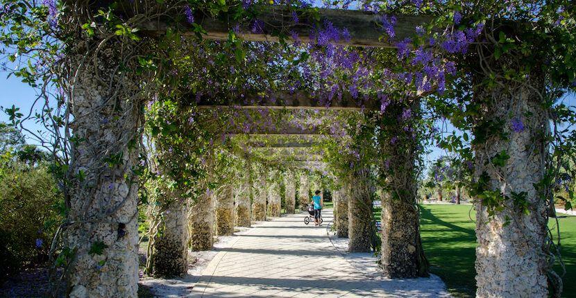 Naples Botanical Garden Information Florida botanical