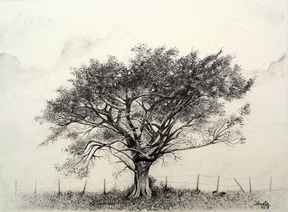Pencil drawing of a tree tree drawings